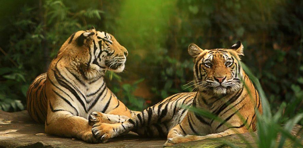Harga Tiket Masuk Bali Zoo 2019-2020 Promo Khusus WNI 17