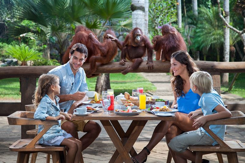Extraordinary Experience of Breakfast with Orangutan at Bali Zoo 1