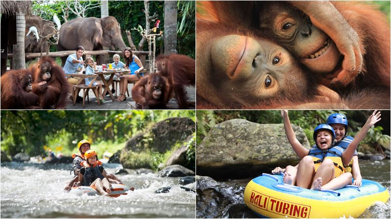 Bali Zoo Combination Packages 16
