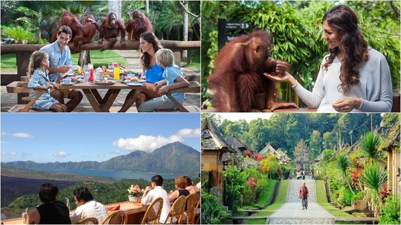 Breakfast with Orangutan + Penglipuran Village Tour 2