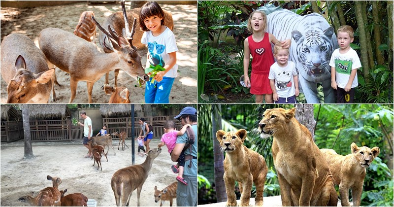 Gianyar Bali Zoo Park - Latest 2019 Ticket Prices & Attraction 1