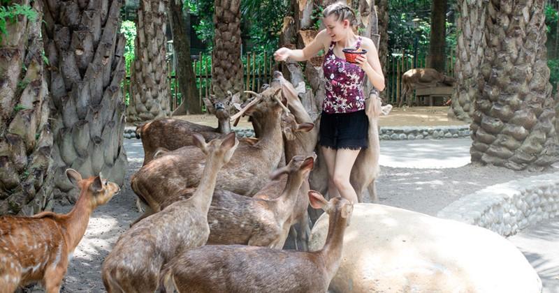 tiket bali zoo dengan harga promo khusus wni